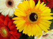 Bright bouquet of flowers for your design.
