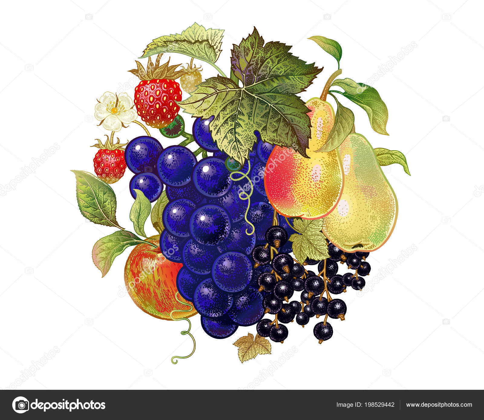 Fruits Berries Decoration Grapes Pears Black Currant Apple
