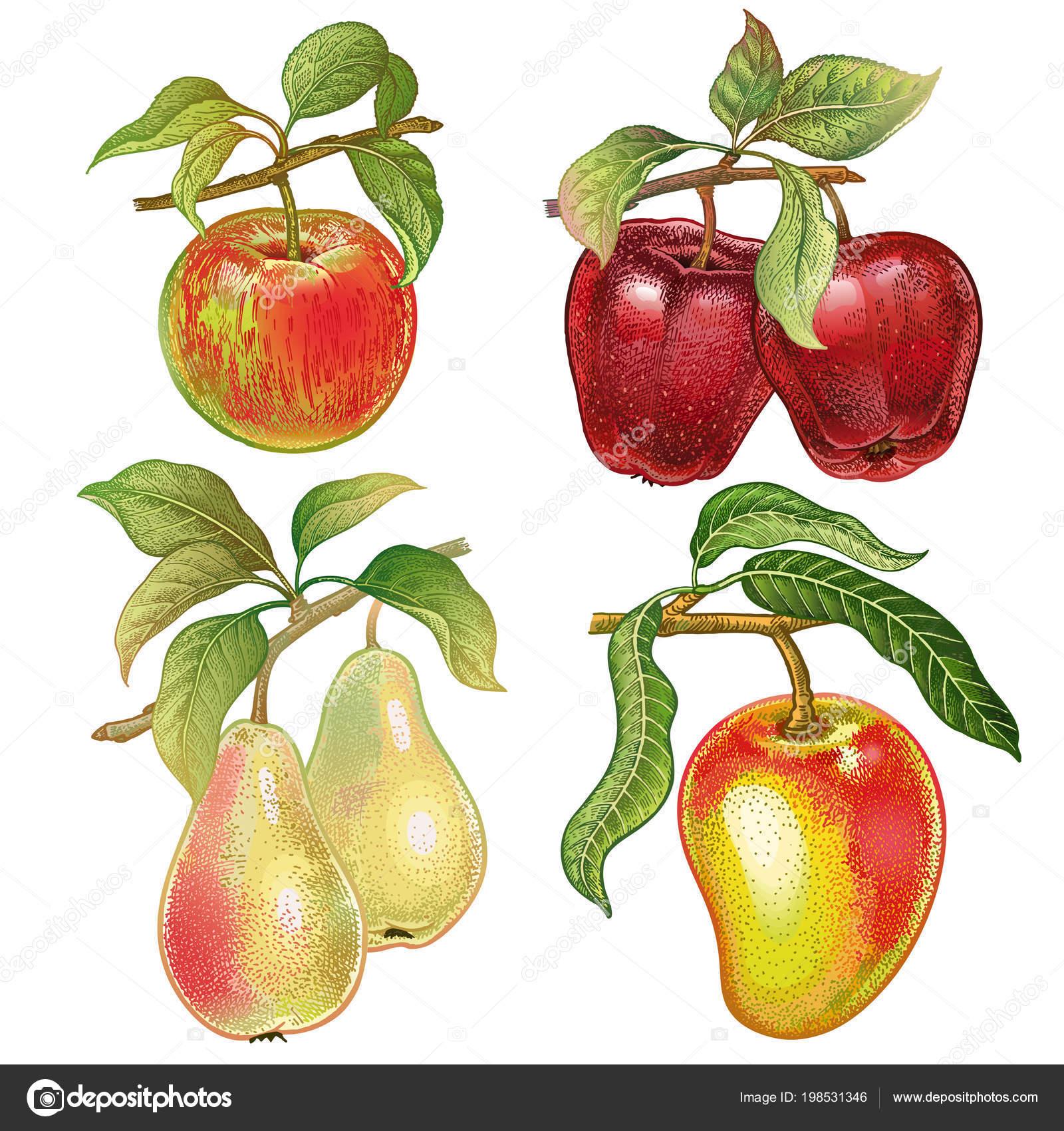 Sada Bobule Ovoce Realisticke Rucni Kresba Pastelkami Cervena Jablka
