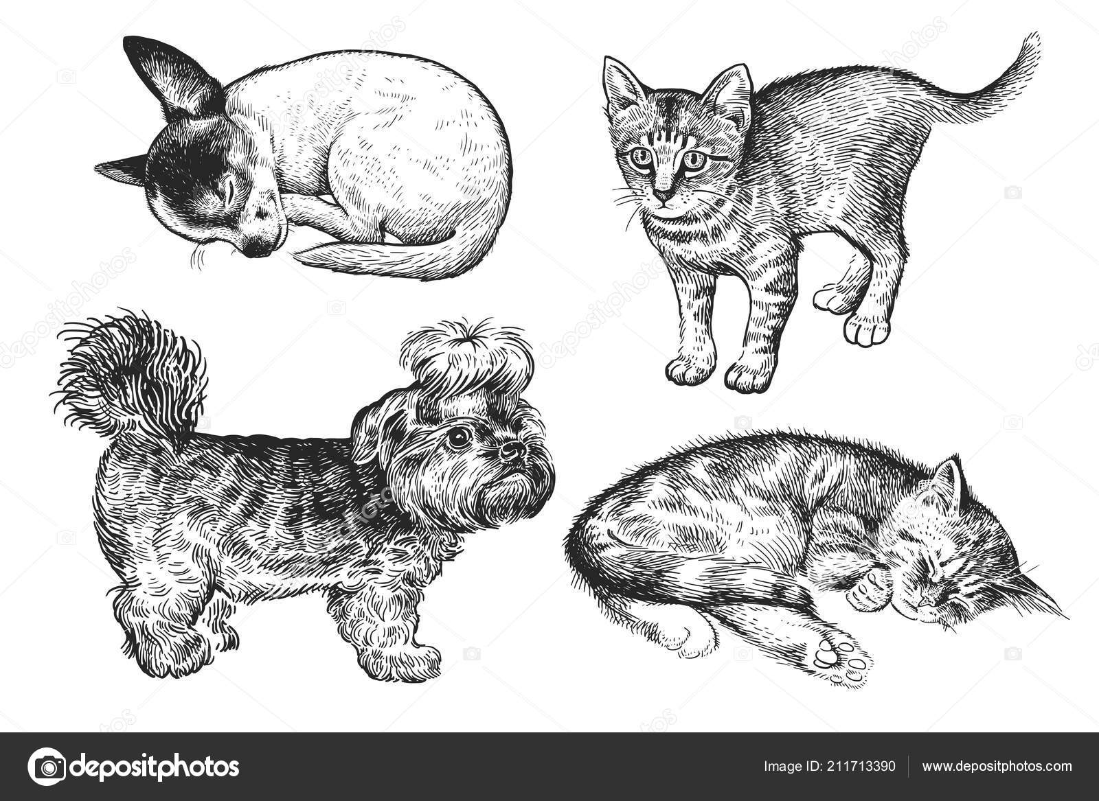 Pictures : puppies and kittens to draw | Cute Puppies