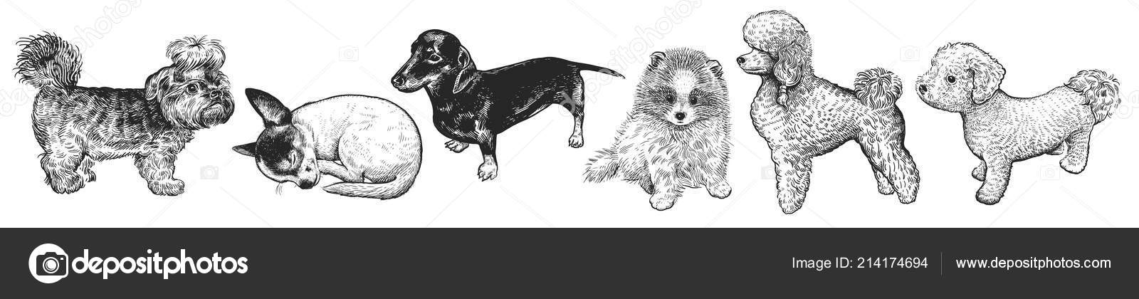 Cute Puppies Set Home Pets Isolated White Background Sketch