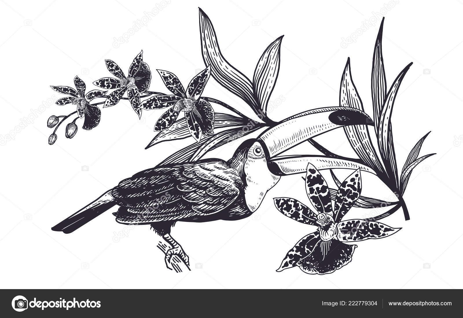 Oiseau Tropical Décoration Les Fleurs Réaliste Main Dessin