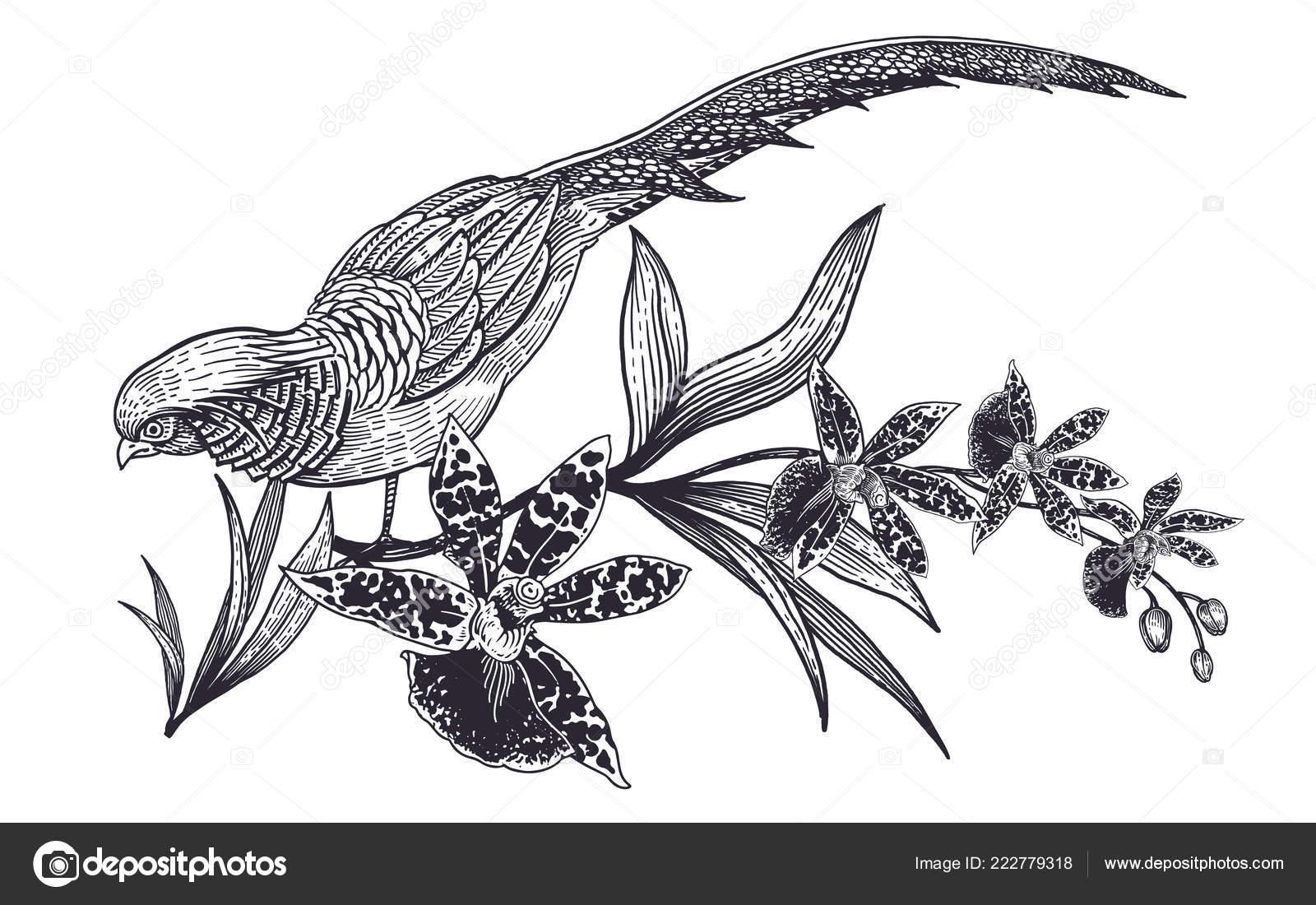 Décoration Avec Des Fleurs Des Oiseaux Réaliste Main Dessin