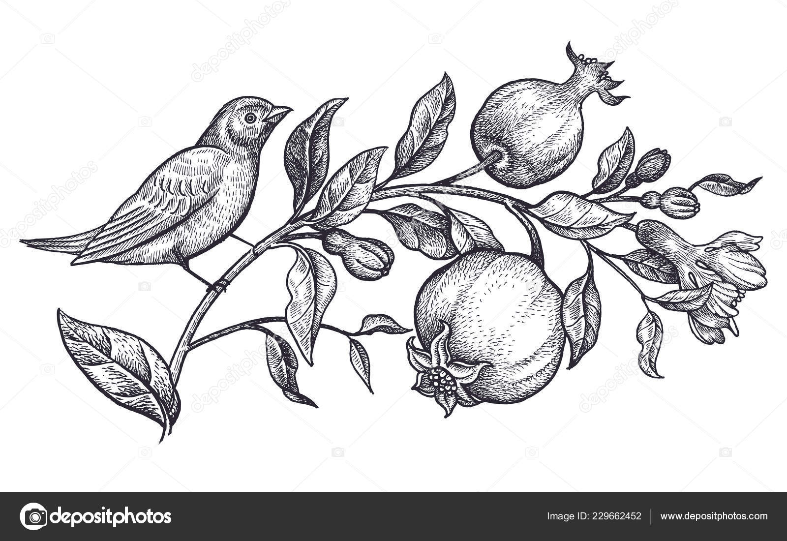 Decoration bird flowers realistic hand drawing nightingale branch pomegranate isolated stock vector