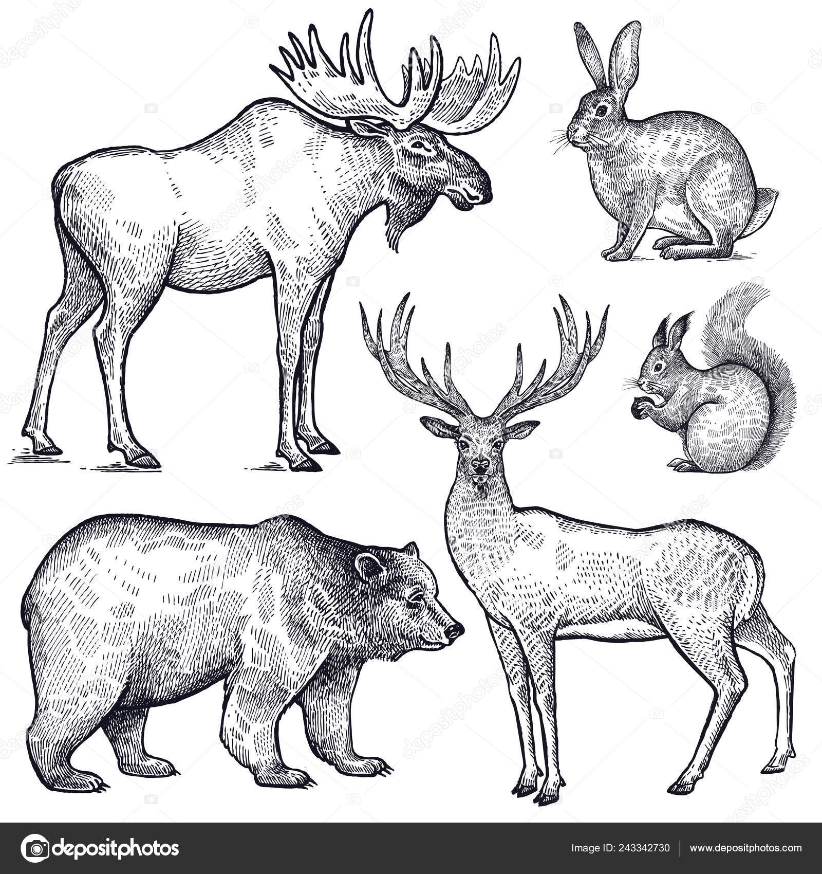 Forest animals set hand drawing sketch black ink isolated