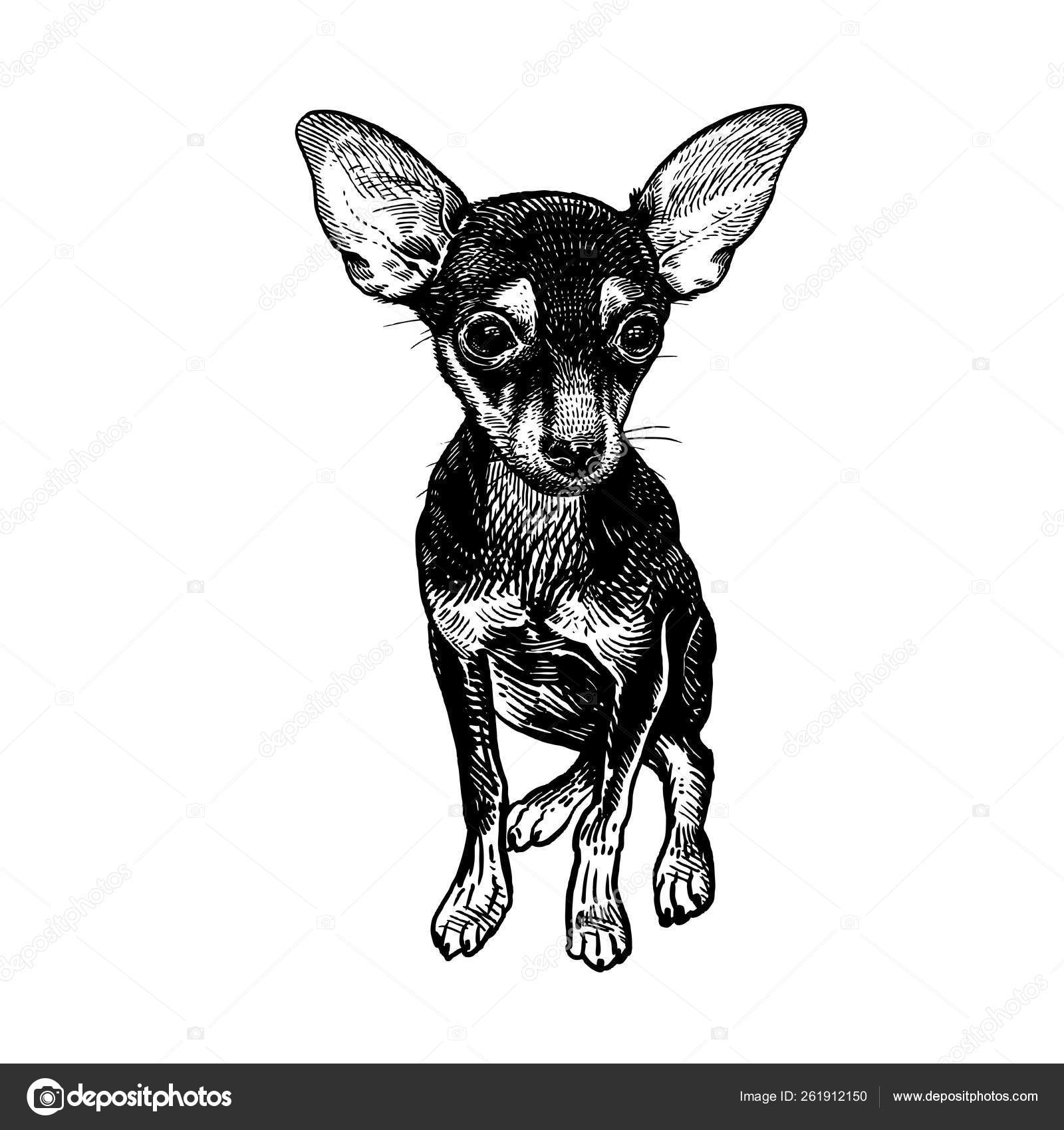 Cute puppy black and white | Terrier dog  Cute puppy  Black