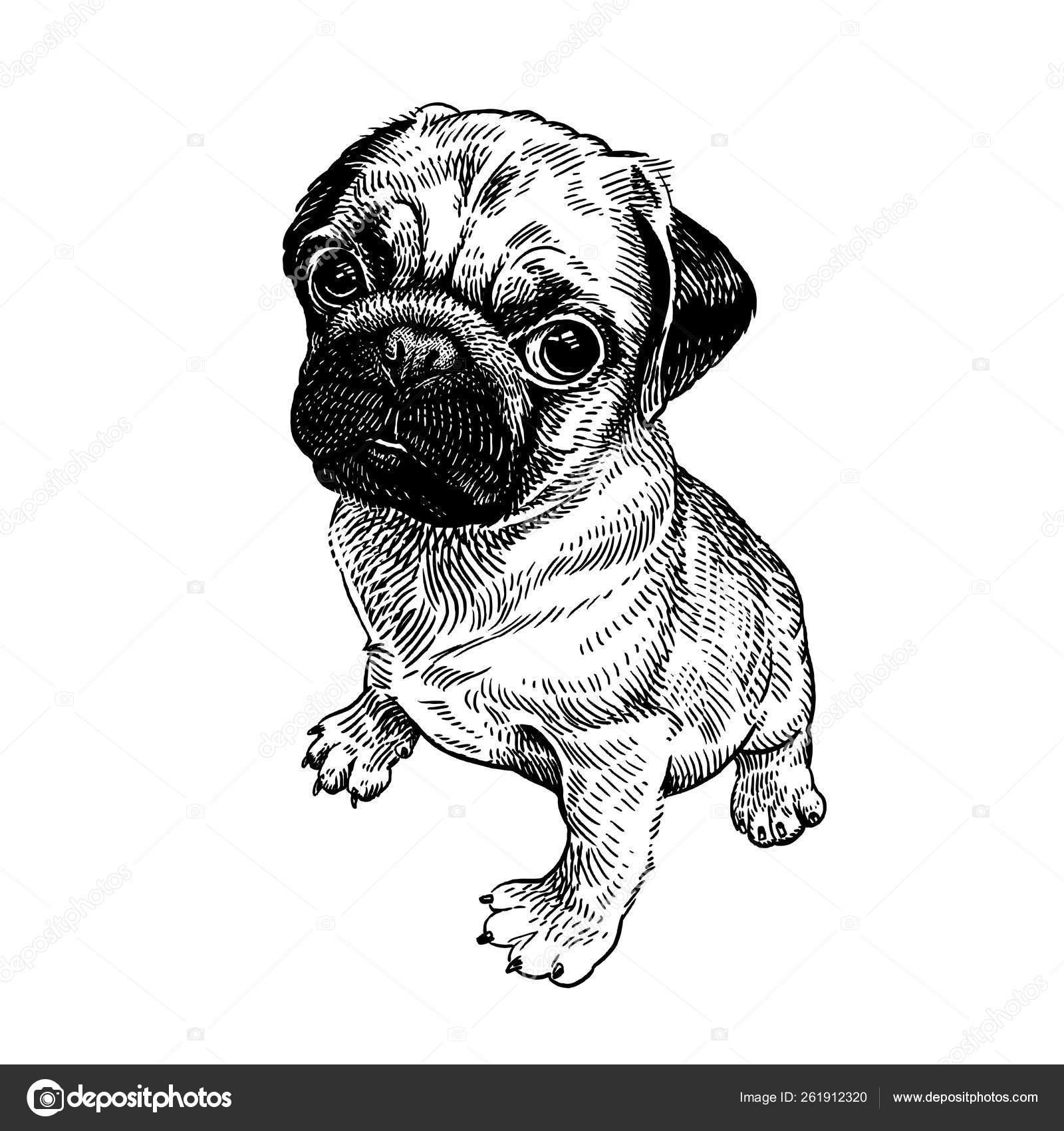 Disegno Cane Bianco E Nero.Cane Pug Cucciolo Carino Disegno A Mano In Bianco E Nero