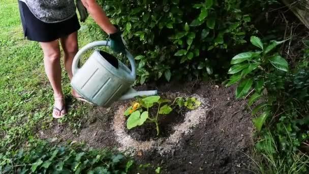 žena zalévání rostlin v zahradě