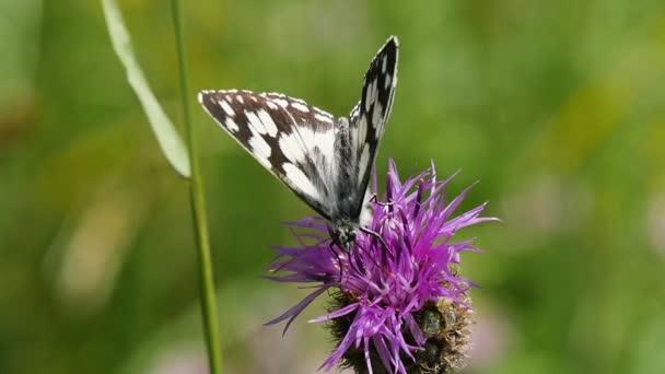 beautiful butterfly on purple flower