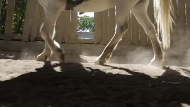Nahaufnahme der Beine eines Pferdes