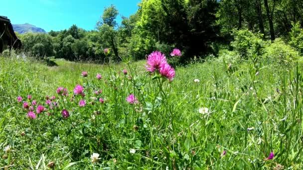 divoké fialové květiny na venkově