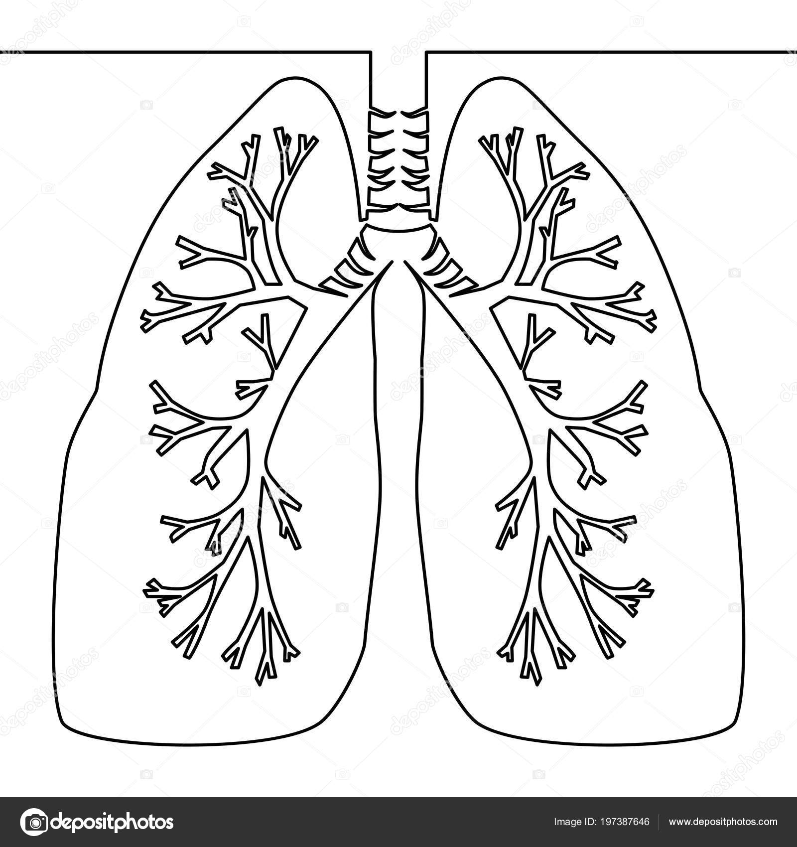 Einzigen Durchgehenden Linie Kunst Anatomische Menschliche Lunge ...