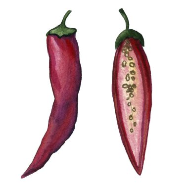 Red hot chilli peppers set. Hand drawing watercolor. Can be used for postcards, stickers, encyclopedias, menus, ingredients of dishes. Style design for the label, cover, prints for some surfaces.