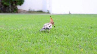 www χύσιμο com μεγάλο πουλί