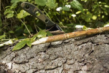 Not a folding knife stuck in a tree. Summer is green.