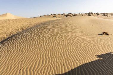 thar desert landscape, view of thar zone, in the rajasthan