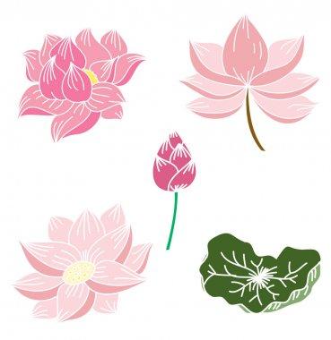 Hand drawn lotus flower isolate vector set