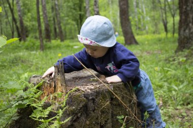 Baby girl exploring the stump in the forest. The kid in Panama touches the stump of a tree. First steps in the forest