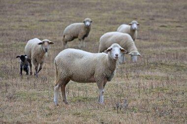 "Картина, постер, плакат, фотообои ""Симпатичная овчарка на мясорубке"", артикул 277908200"