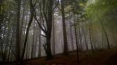 foggy misty mountain forest