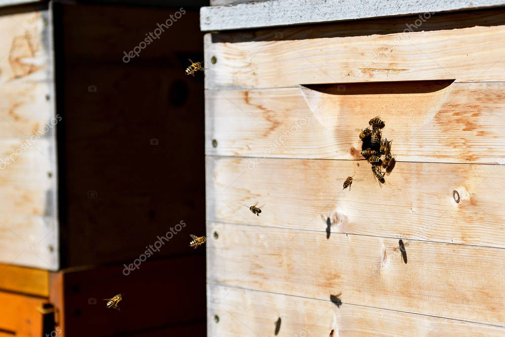 Groups of bees swarming in a hive.
