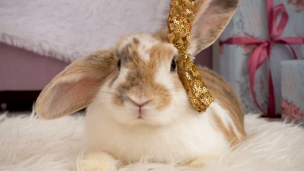 Video of cute beige rabbit with a bow