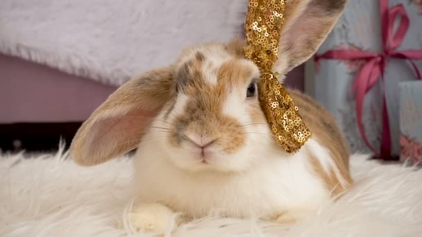 Video of cute beige bunny with a bow