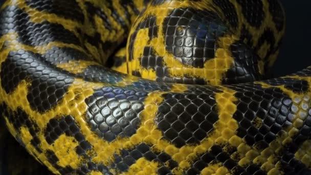 Closeup fényképezés csúszó sárga anaconda