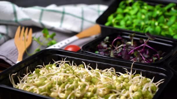 Mikrozöldségek videója - retek, borsó tartályban