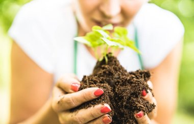 Farm worker taking care on small basil plant at alternative farm - Biology agronomy and earth day concept with farmer working on environmental sustainable culture - Organic cultivation company
