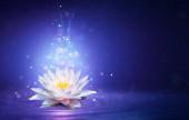 Magic Lotus virág tündér fény - csoda és rejtély koncepció