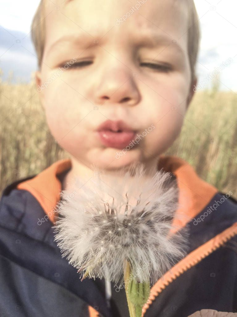 2 years boy blowing dandelions at cereals field. Closeup