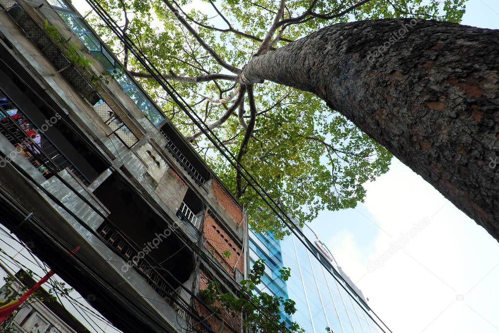 HO CHI MINH CITY, VIET NAM- AUG 8: Old  building and big tree from bottom view up to sky at Saigon, Vietnam