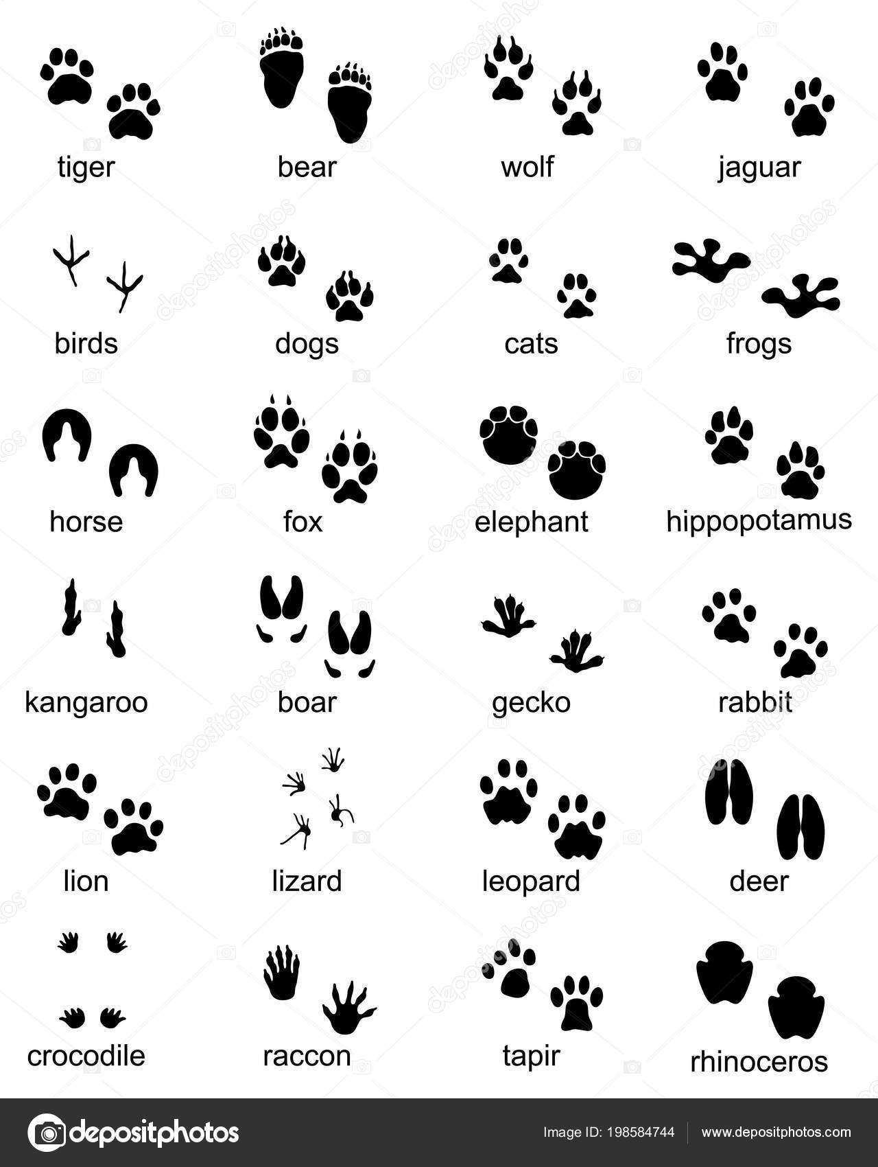 野生動物の足跡のセット 黒のシルエットのイラスト — ストックベクター