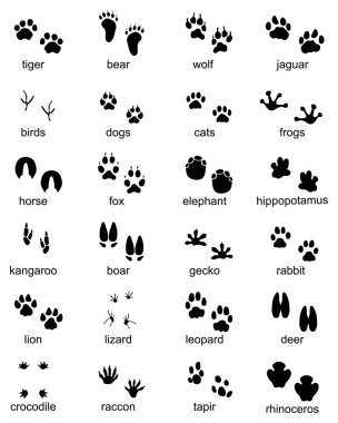 Set of footprints of wild animals, illustration of black silhouette