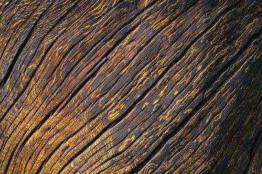 Dark wooden abstract texture