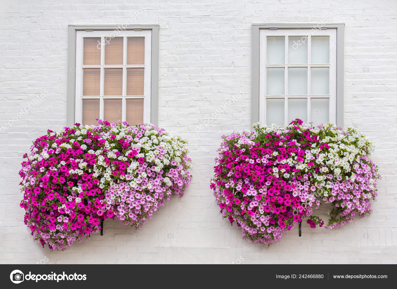 White Brick Wall Windows Flowers Flower Boxes Stock Photo Image By Benschonewille 242466880