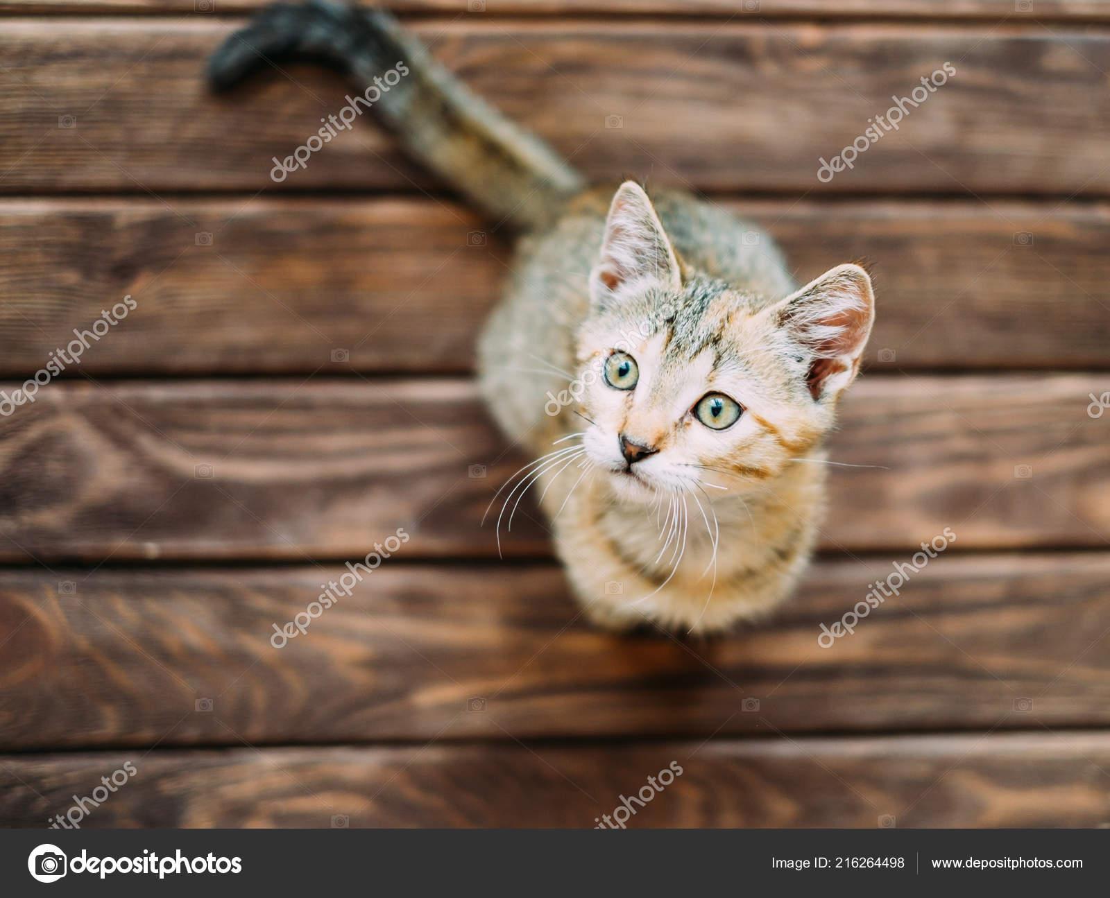 velká kočička olízla