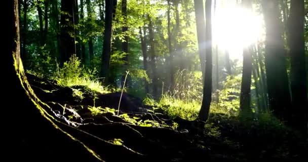 kachny a krmivo v lese. Kamera se pohybuje po posuvníku