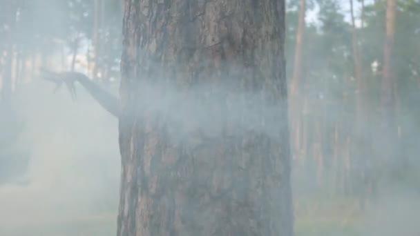 Vonzó driádokat vagy erdei tündérek jön ki mögött fa törzs és a tánc a gyönyörű jelmezekben a felhő a füst. Az erdei teremtmények ősi rituálé. Teljesítménye táncosok az erdőben