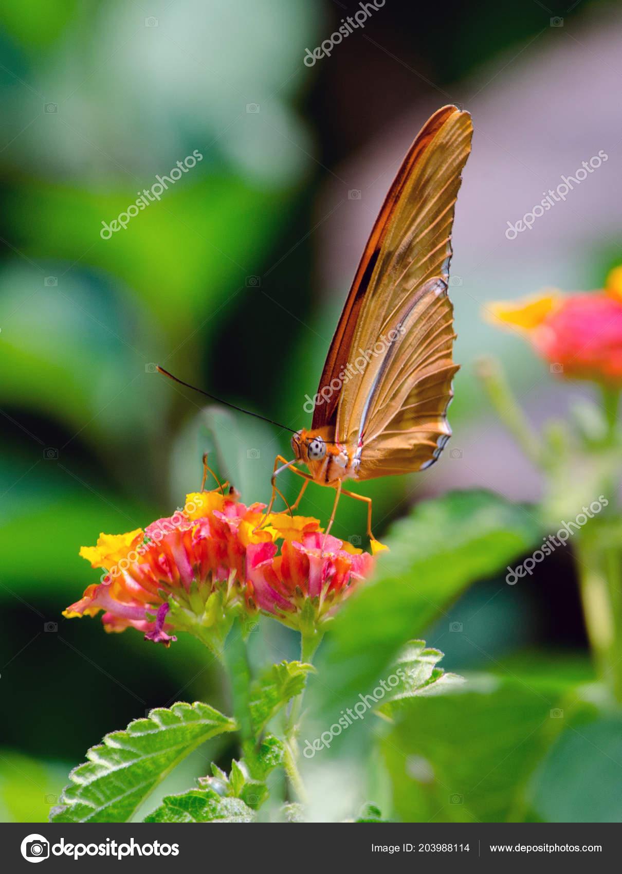 Pretty Orange Butterfly Rests Bright Orange Yellow Flowers Michigan