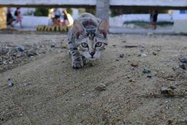 A cat walks on the beach.