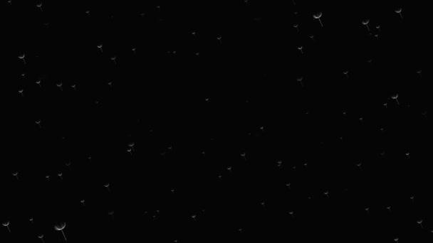 Animovaná animace bílého flufa letíka na černém pozadí.