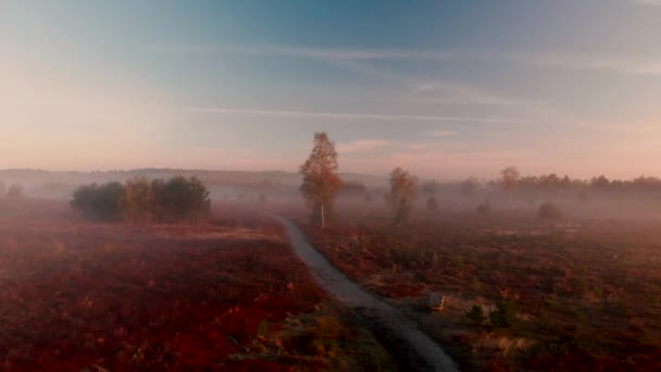 Aerial view of early morning misty typical Dutch landscape of moorland zooming in on a birch along a dirt road with purple heather surrounding it