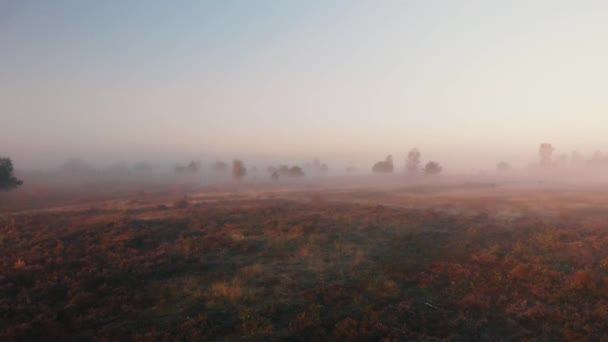 Aerial view of early morning misty landscape panning backwards revealing the wider field with a dirt road passing through