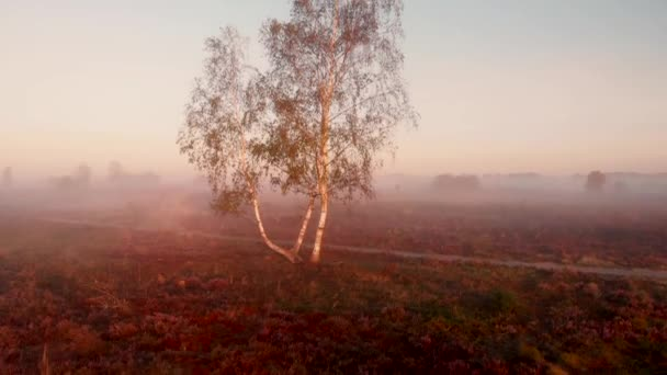 Aerial view panning up from ground level to show the wider moorland landscape covered in early morning mist behind the birch along a dirt road in the foreground