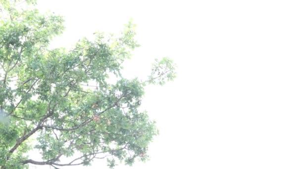 zanechá ve větru pomalé šlapoty s lehkým pozadím