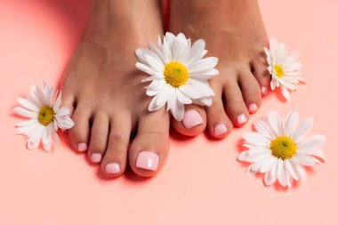 Foots of a girl in the flower buds of daisies, pink pedicure on a pink background. Top view with place for text.