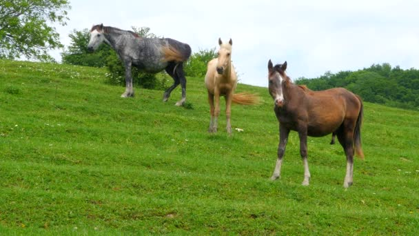 koně pasoucí se v oblasti za slunečného dne