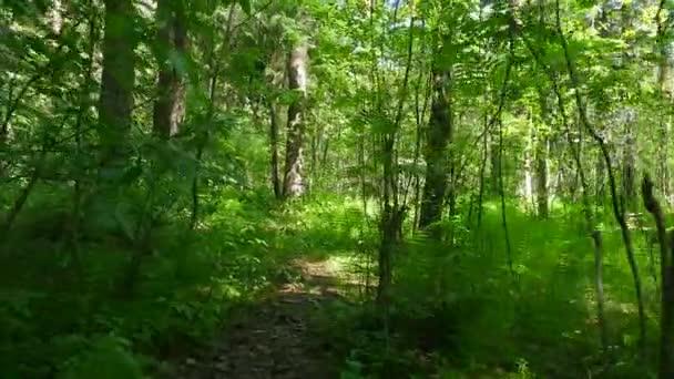 Projít borovým lesem za slunečného dne
